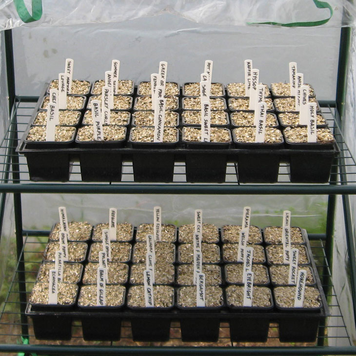 propagation-from-seed