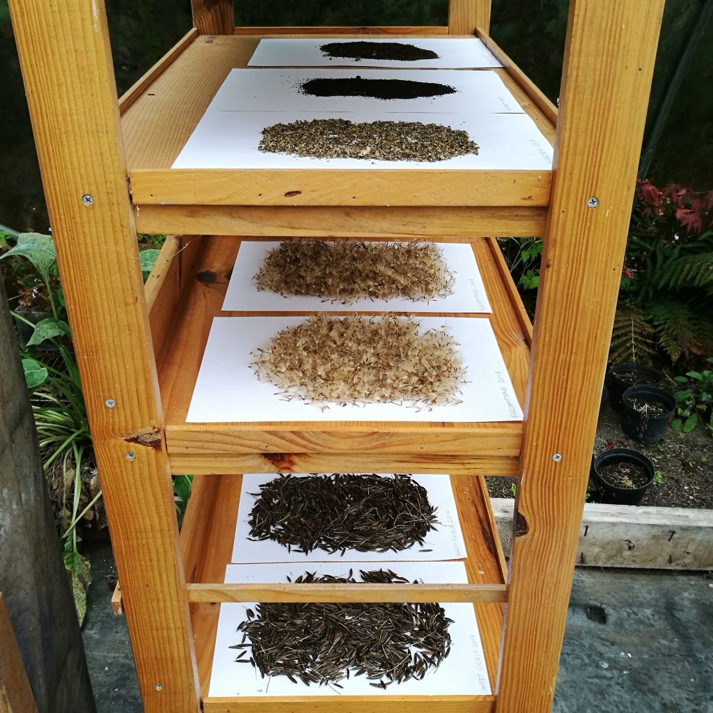 Seed Saving at The Herb Garden