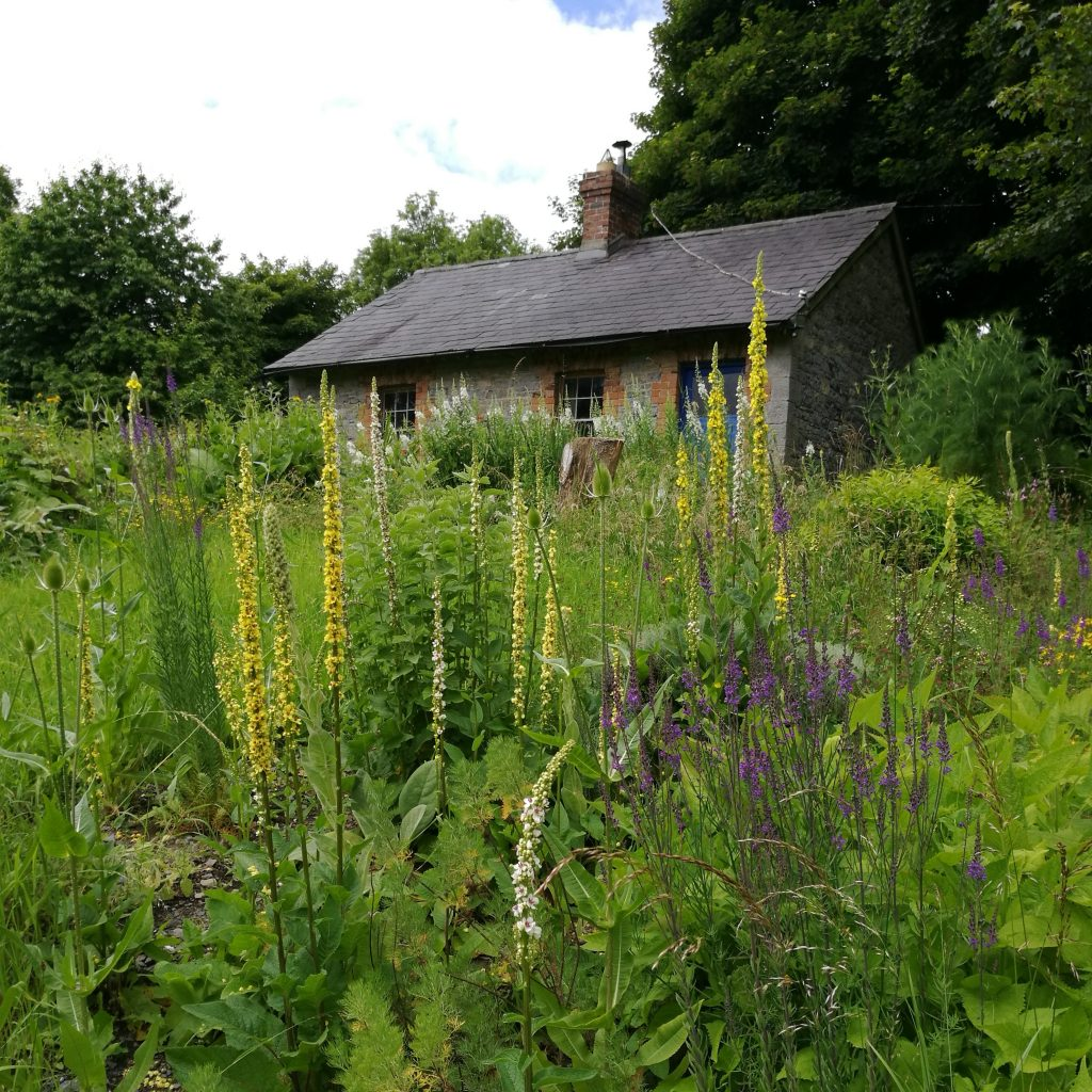 the herb garden cottage and wildflowers